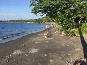 3.2 ht Black sand beachfront investment property, North Shore, Lombok 6
