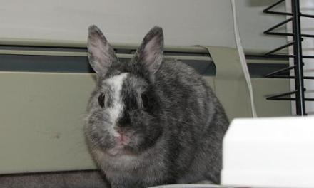 R.I.P. Roy the Bunny (2002 – 2007)