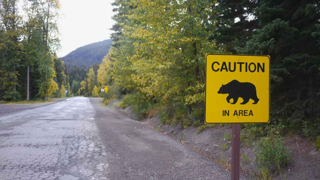 Caution: Bears in Area #5DadsGoWild