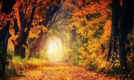 What's Up Wednesdays: Fall Wisdom