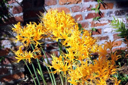 Bright Yellow Flowers - LSU Lakes