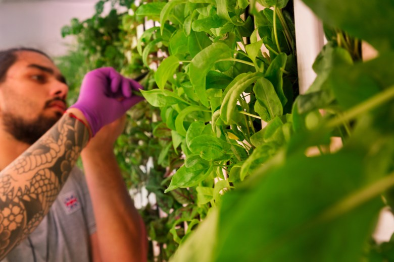 Vertical Farming - dish harvesting off the wall - Square Mile Farms | BTR News