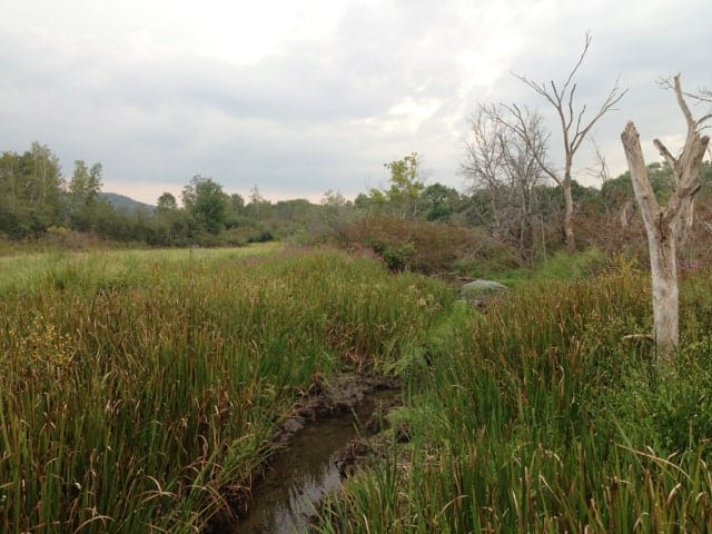 The Sacred Way trail winds through a marsh.