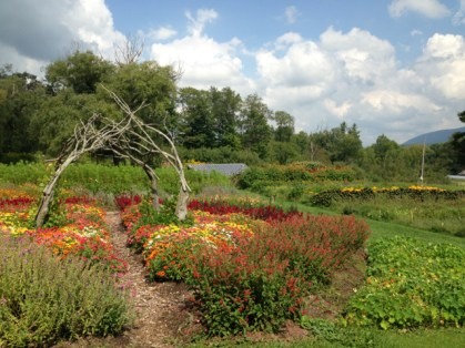 Flowers bloom near the herb garden at Caretaker Farm in Williamstown. Photo by Kate Abbott