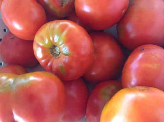 Bartlett's Orchard in Richmond had a colorful selection of heirloom tomatoes on Sunday. Photoby Kate Abbott