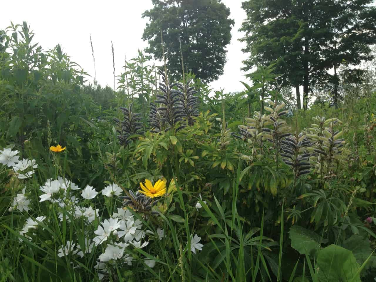 Wildflowers near the kitchen gardens and the quarry pool support the bee hives. Photo by Kate Abbott
