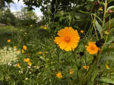 wildflowers bloom in the meadows, and the gift shop sells wildflower seeds. Photo by Kate Abbott