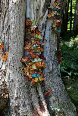 Butterflies gather as part of an artwork in Sculpture Now 2018 on the grounds of the Mount in Lenox. Photo by Thom Smith