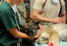 Veterinaire Kliniek Dierenarts Hond Patiënt