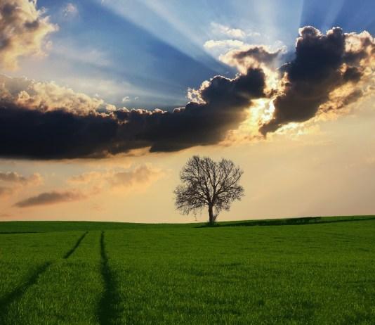 platteland grasland met boom en wolken erboven