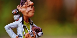 Dierenarts Uil Dieren Grappig Veterinaire Arts Hond Muis