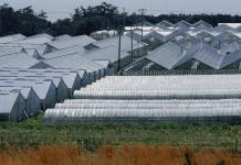Glastuinbouw Glastuinbedrijf