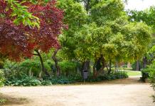 Parkeerplaatsen en tuin