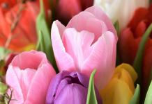 Snijbloemen Tulpen Bloemenkweker