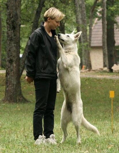 Ütlusi koerte kohta 3