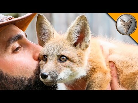 Baby Fox Is Excited To Be Interviewed