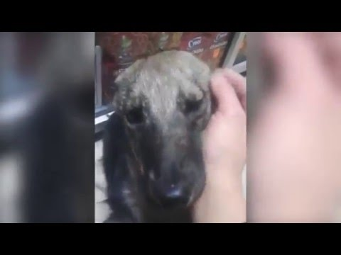 Abused Dog Reacts to Loving for the First Time