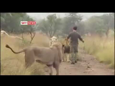 Lion Whisperer's Incredible Bond With The King of The Jungle