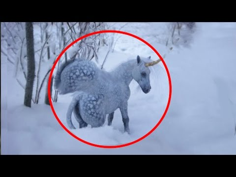 5 Pegasus Caught on Camera & Spotted In Real Life!