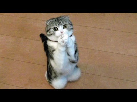 Funny Cats And Dogs Begging For Food