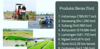 Banyuasin Penghasil Beras Terbesar ke 4 Nasional