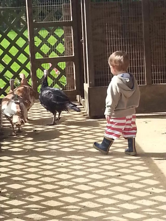 toddler in wellies and shorts
