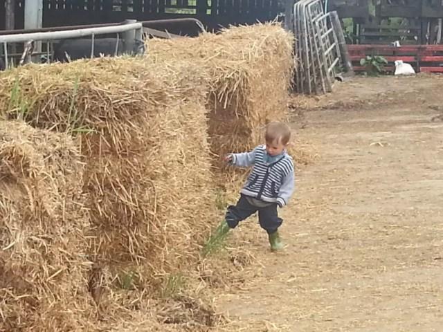 Kicking straw bales