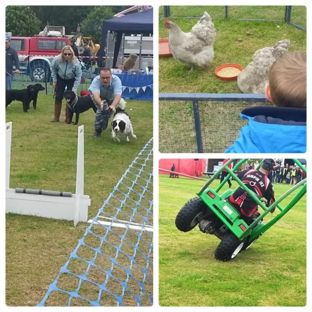 dog events, chickens and quad bike rolling