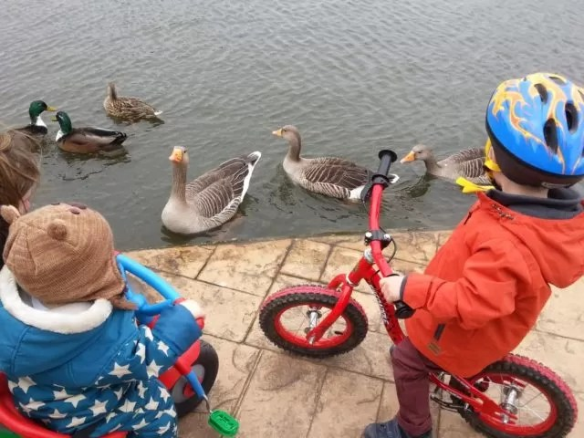 boating lake cleethorpes ducks and geese