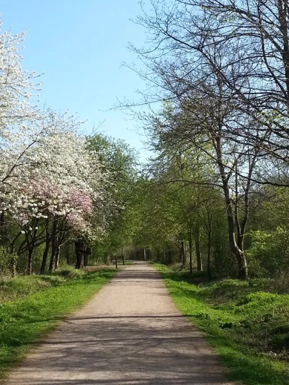 salcey forest blossom