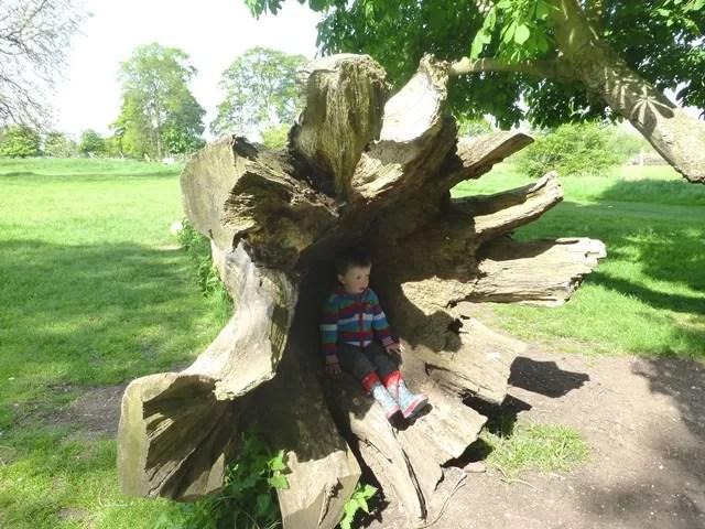 inside a tree trunk