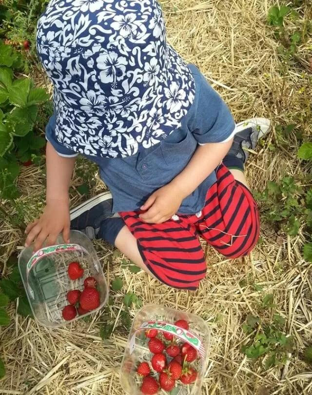 strawberry picking punnets