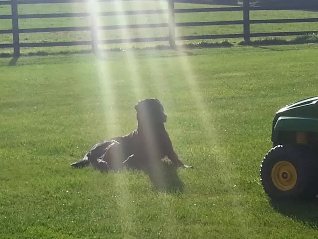 dog sitting in the sun's rays