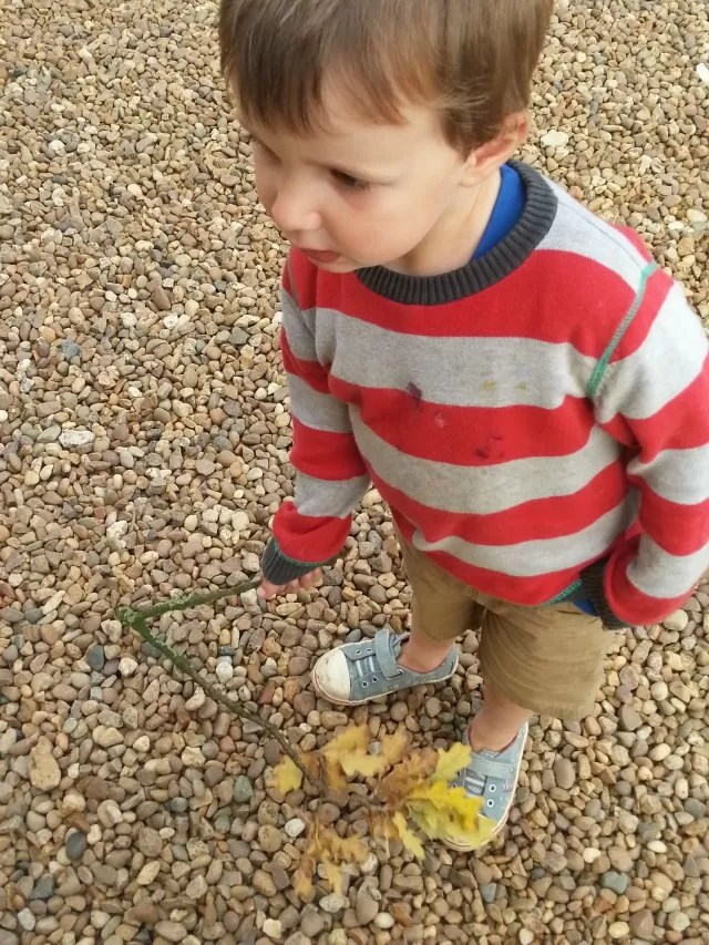 play with oak tree twig