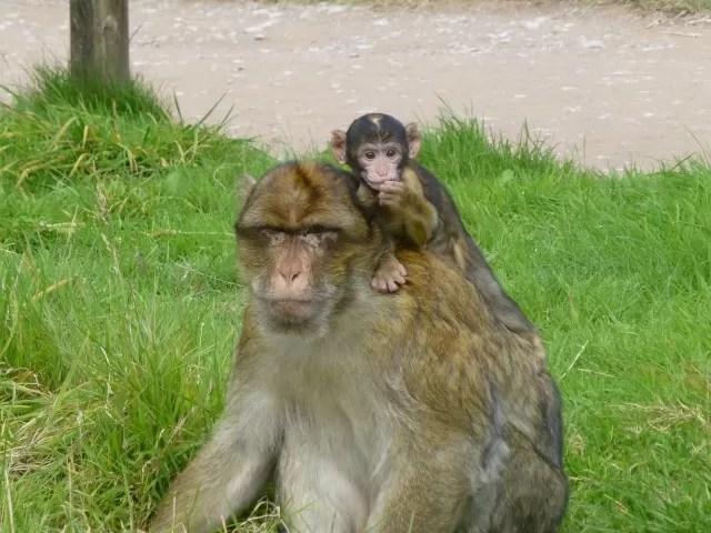 baby monkey at Monkey Forest