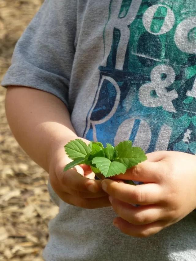 leaf bouquet for mummy