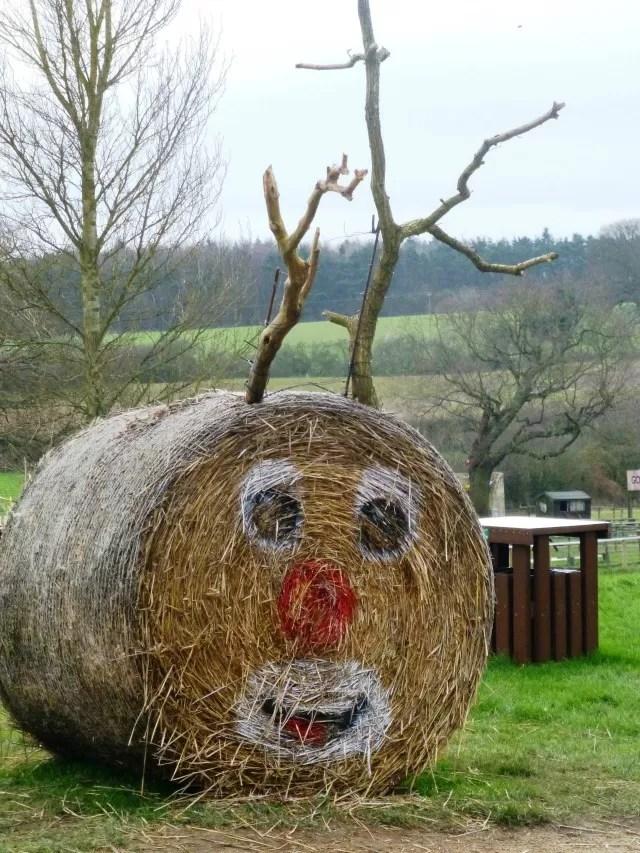Reindeer hay bale