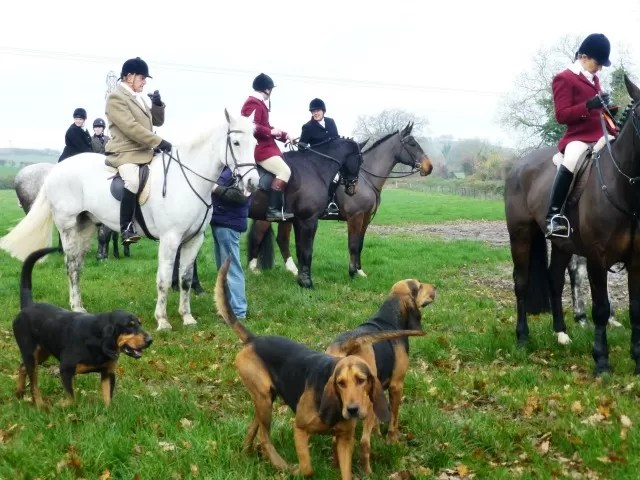 farmers bloodhounds meet at the farm
