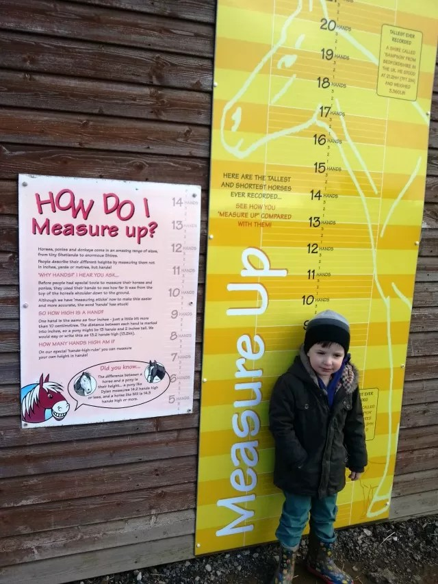 how do children measure up in hands - Redwings