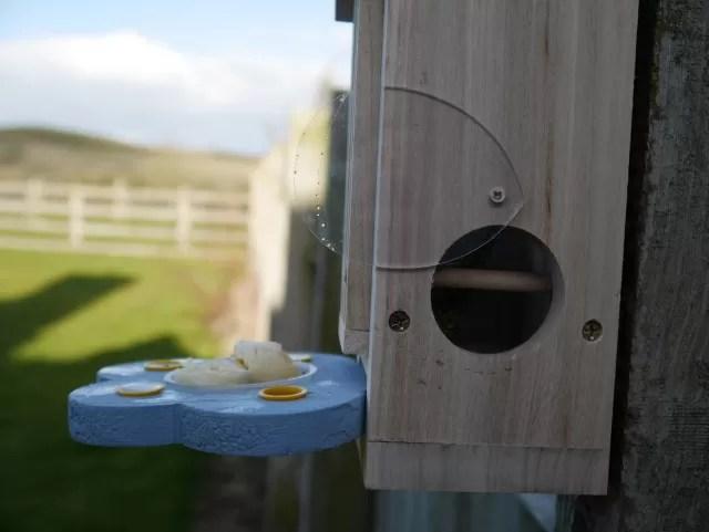 butterfly habitat observation window