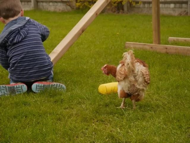 chicken enjoying the garden with N