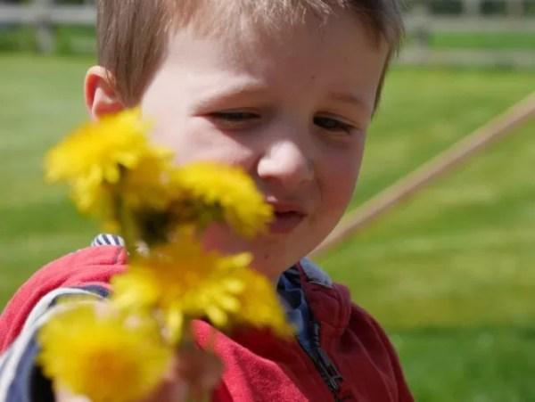 giving dandelions - Living Arrows 20