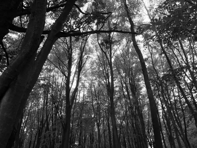 looking up in the woods