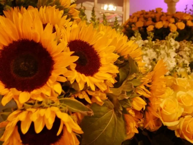 Summer flowers at the Lindeman's display at Britmums Live 2015