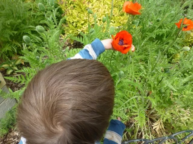 enjoying the poppies