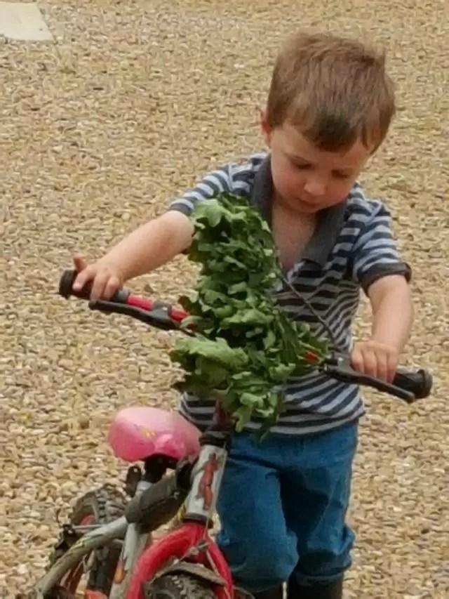bike bedecked in leaves