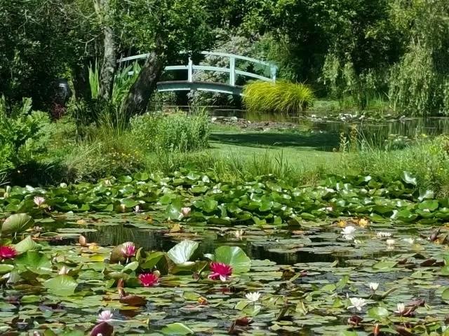 Monet Bridge at Bennetts Water Gardens Weymouth