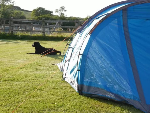 dog relaxing by the tent