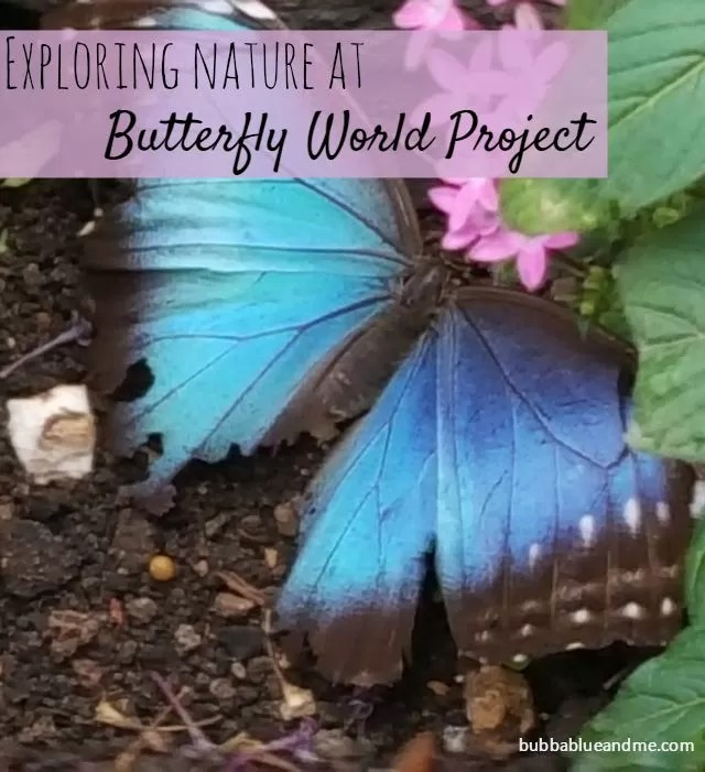 exploring nature at Butterfly World Project