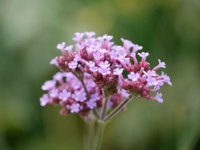 purple flowers and bokeh